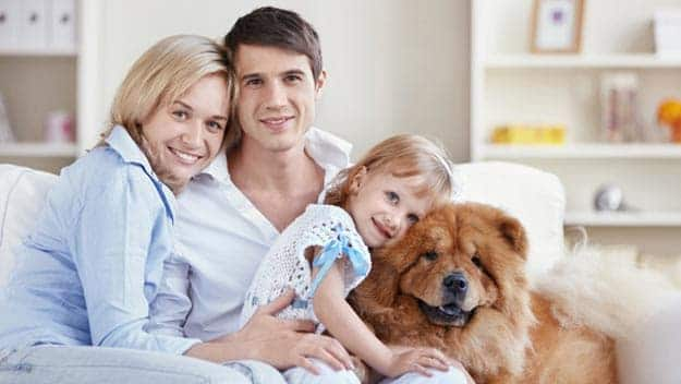 Wills & Trusts dog-young-family Direct Wills Christchurch